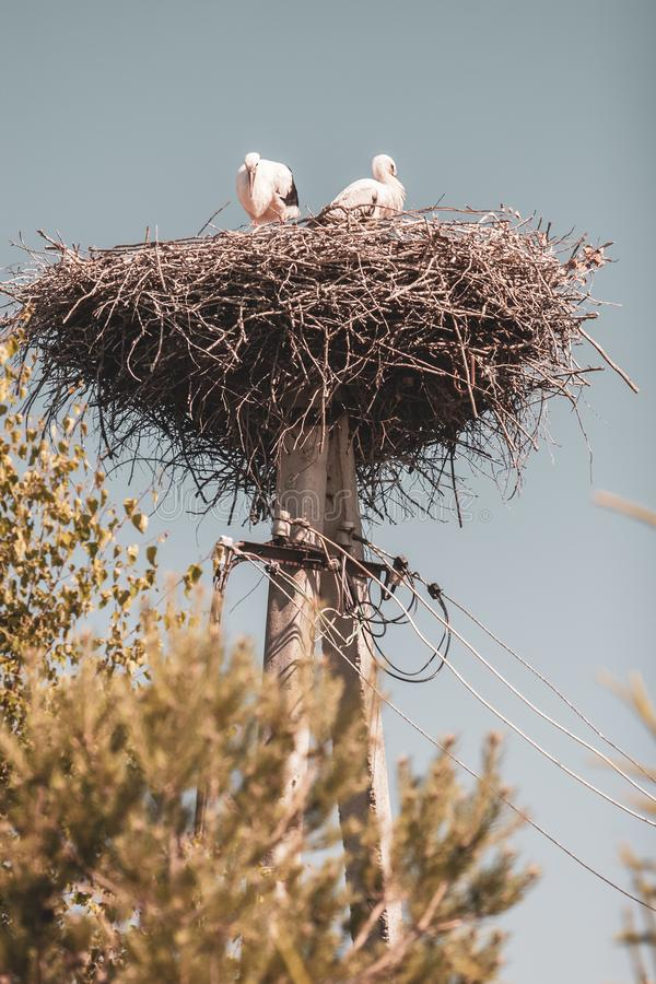 Two storks in a nest of branches on a pole royalty free stock photos