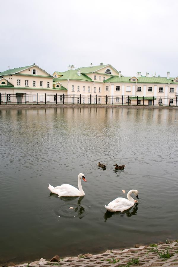 Two-story house with a green roof, located behind a fence on the pond on an overcast day. Two swans and two ducks swim in the pond. And eat bread. The city of stock images
