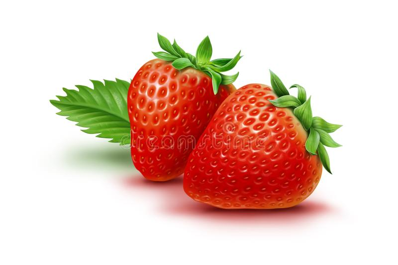 Two strawberries and leaf isolated on white background, illustration stock photo