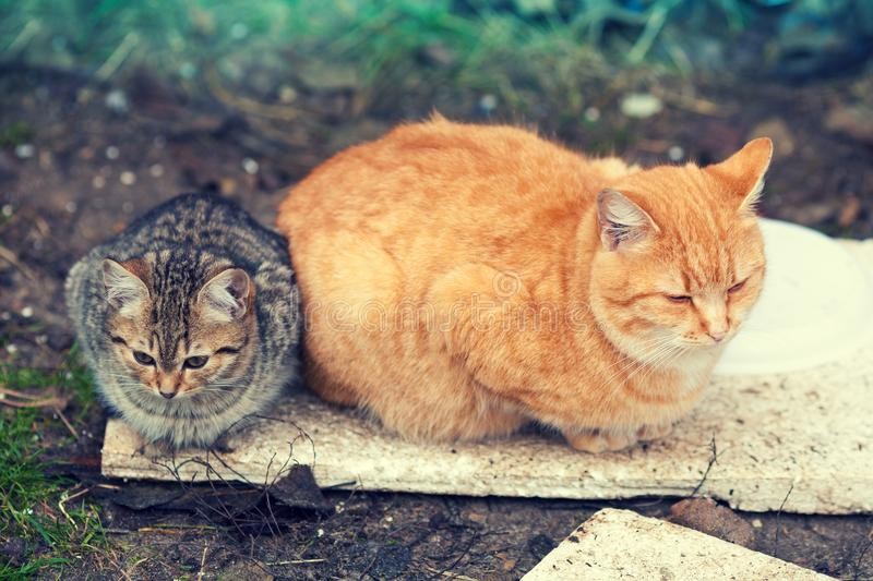 Two stray cats lying outdoors stock photo