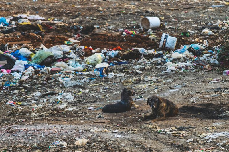 Stray dogs editorial stock image  Image of abandoned - 118893889