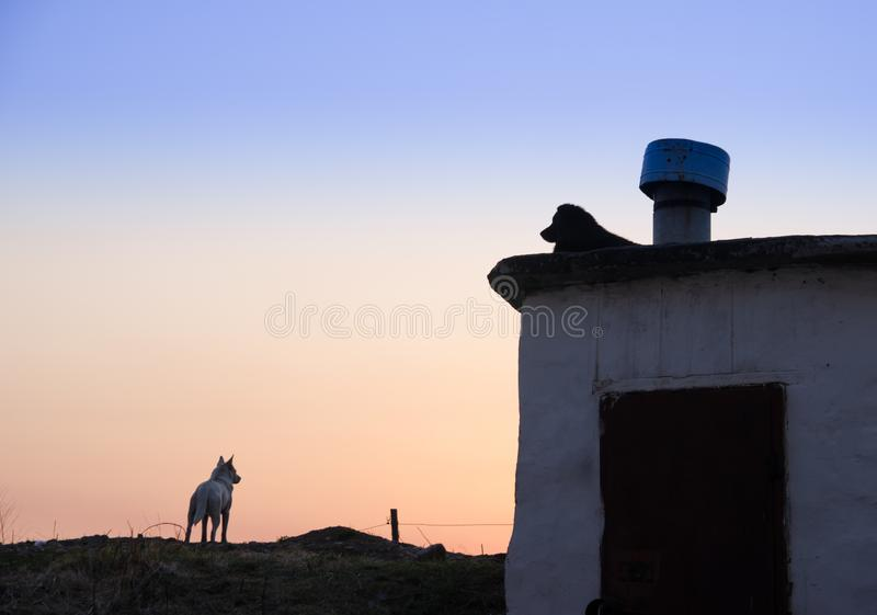 Two stray dogs at sunset. one is on the roof, the other is watching the sunset stock photo