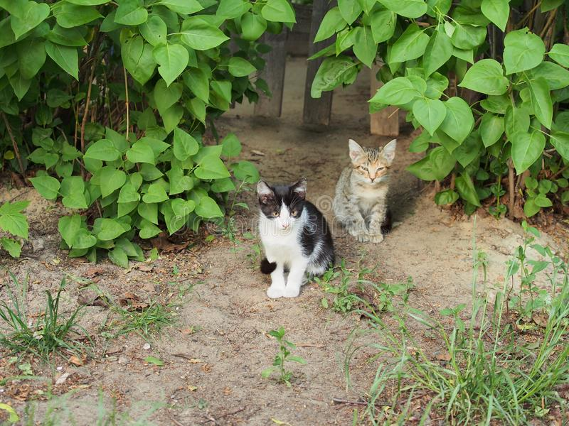 Two stray kittens. One is black and white, the other is gray with stripes stock photos