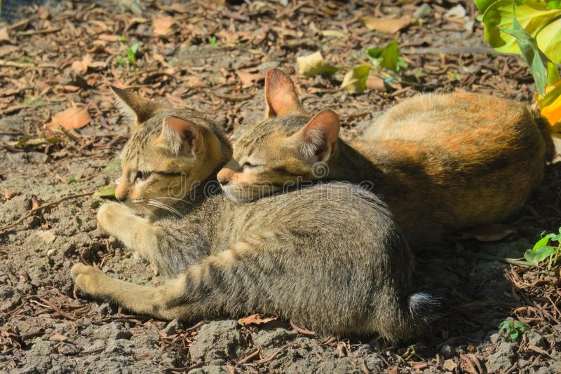 Two stray kittens, starring into the sun, on a bright sunny day. royalty free stock photos