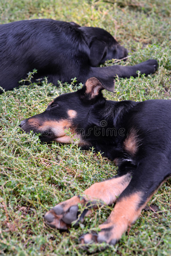 Two stray puppies stock photos