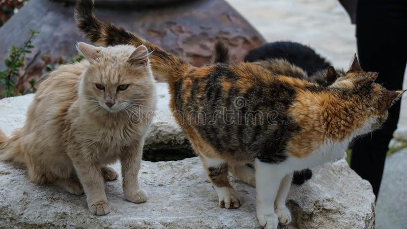 Two street cats in Cyprus stock photos