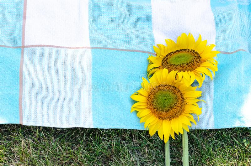 Two sunflowers on the bedspread and green grass royalty free stock images