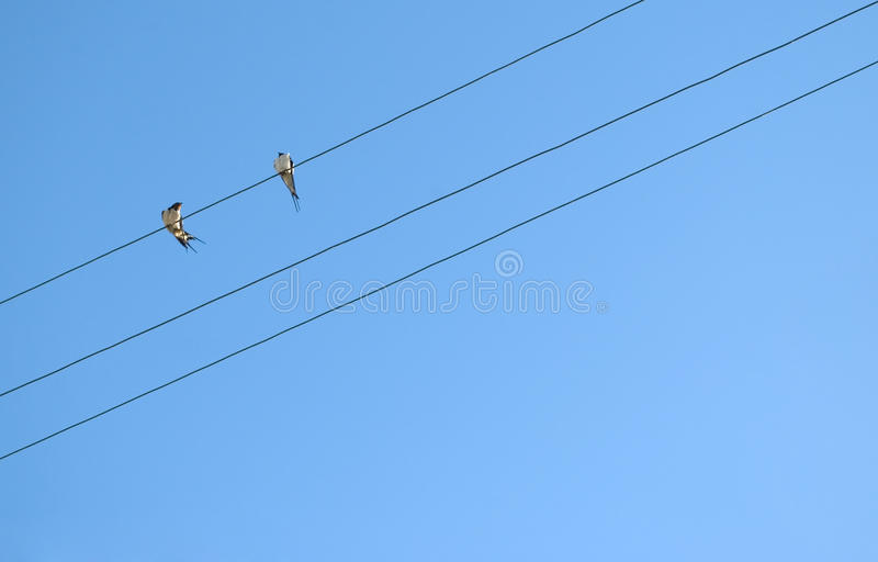 Two swallow birds stock photography