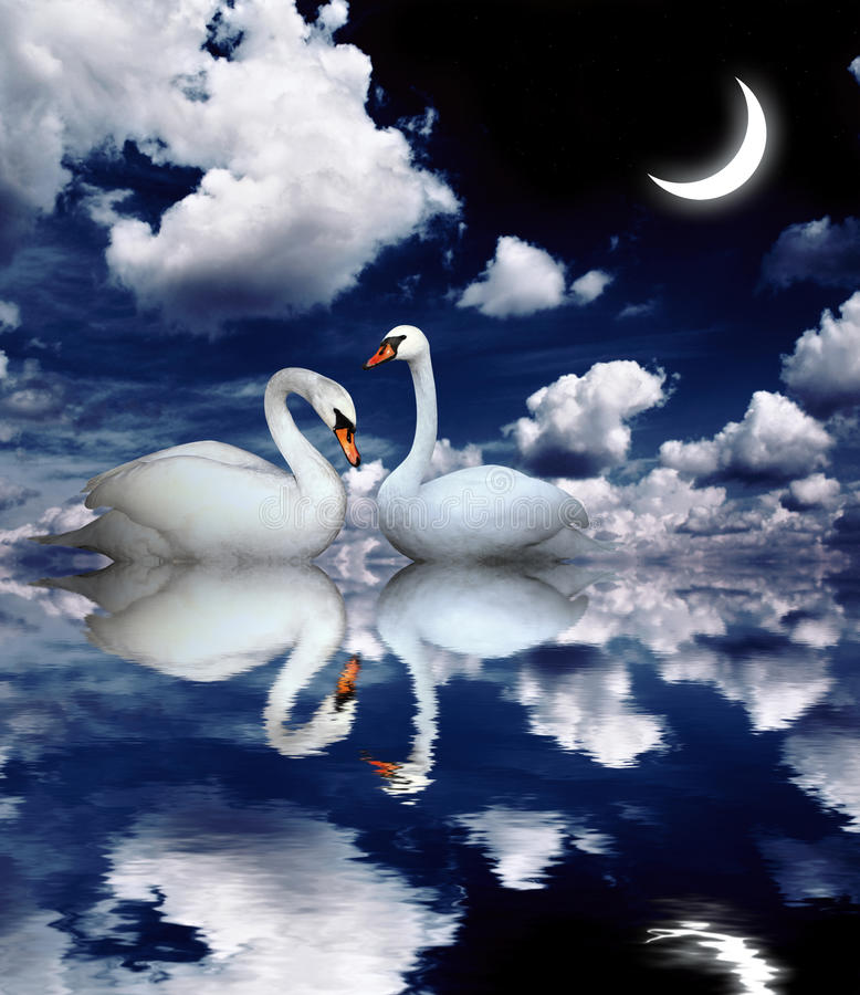 Two swans royalty free illustration