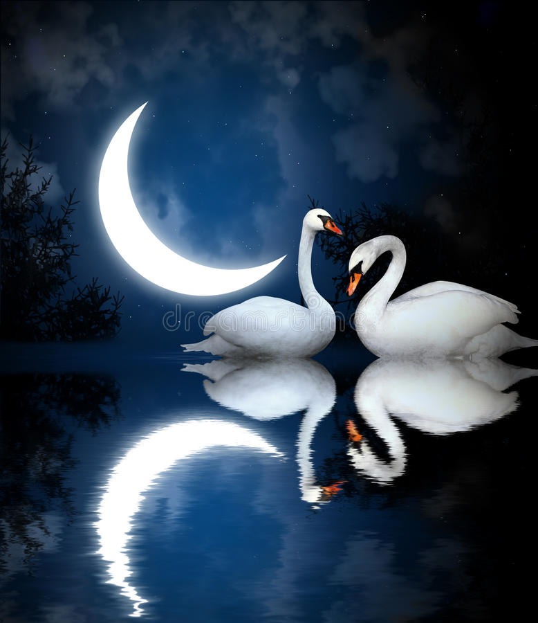 Two swans vector illustration
