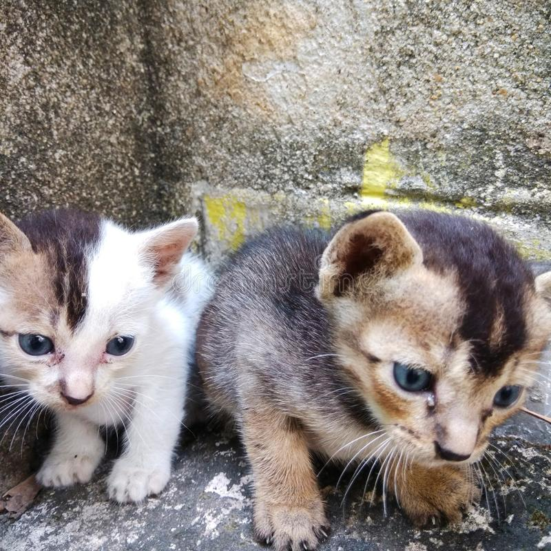 Two sweet kittens are sitting. royalty free stock image