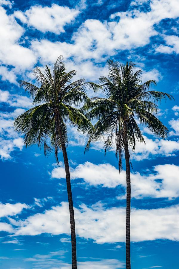 Two tall palm trees against the sky stock images