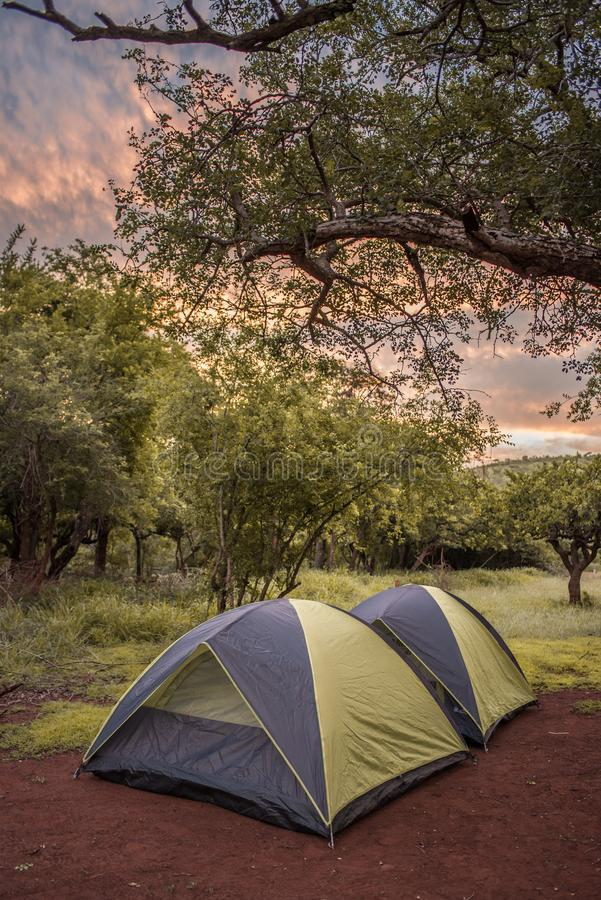 Two tents pitched in the campsite under a tree at sunset stock images