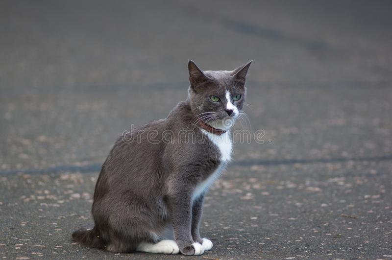 cat on the path of the city Park stock photography