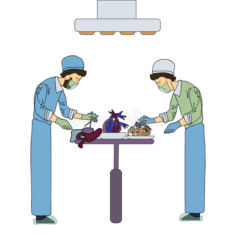 Two transplant surgeons work with organs for transplantation. Medical vector illustration, isolated on white. stock illustration