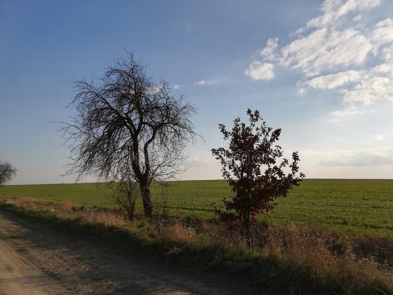 Two tree on green grass in Poland royalty free stock image