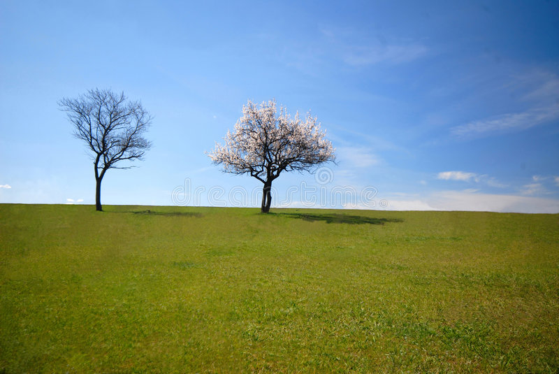 Download Two trees stock image. Image of countryside, brown, horizontal - 2252563