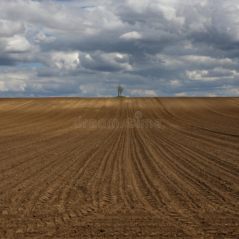 Download Two trees stock image. Image of plowed, agriculture, plant - 24355437