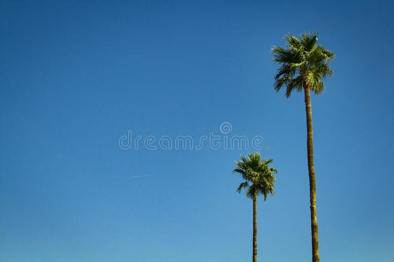 Two Trees Against the Sky royalty free stock photo