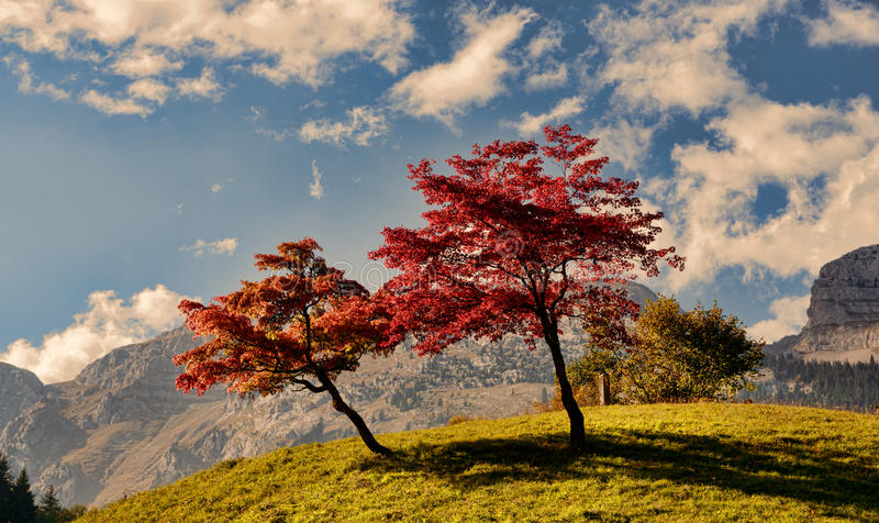 Two trees with beautiful fall colors stock photos