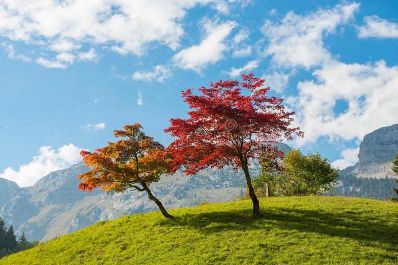 Two trees with beautiful fall colors royalty free stock photo