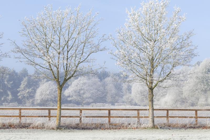 Two trees in a deep frozen winter. Beautiful rural winter scene with heavy frost on trees and a two rail wooden fence. Clear blue sky and frozen fields. Two stock photos
