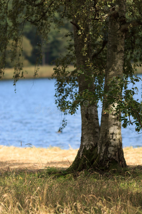 Two trees in front of the blue lake royalty free stock images