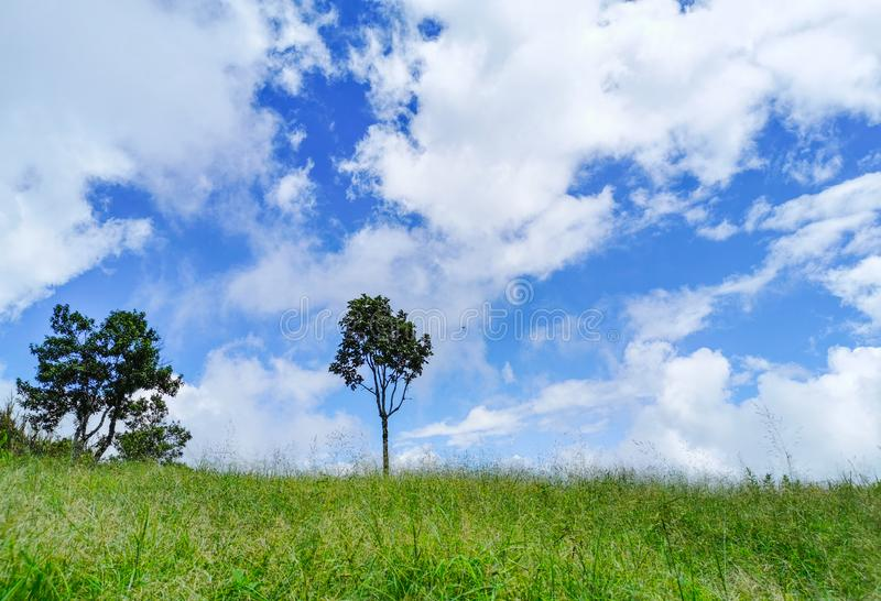 Two trees in the meadow on cloud and blue sky background. Beautiful, beauty, blossoming, clouds, climate, cloudscape, concept, countryside, day, environment royalty free stock image