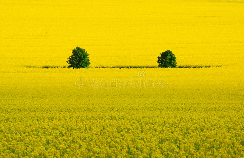 Two Trees In Royalty Free Stock Image