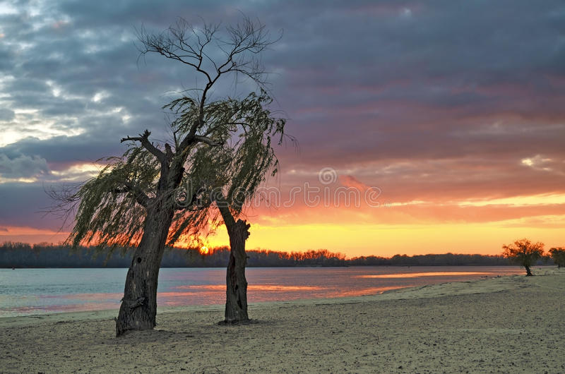 Two trees on the river bank at sunset. stock photo