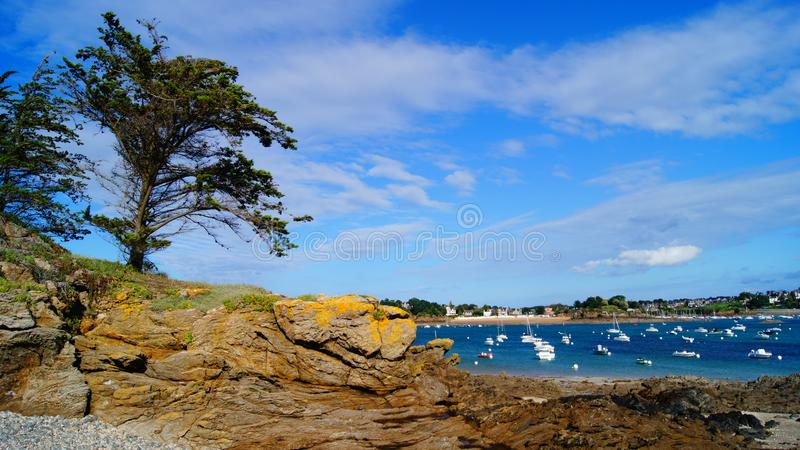 Two Trees on Rock Beside Body of Water stock photos