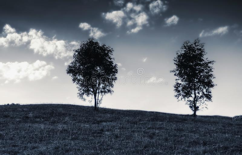 Two trees on top of the hill stock photo
