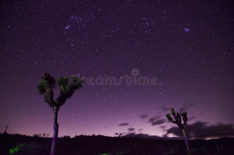 Two Trees Under Purple Sky royalty free stock image