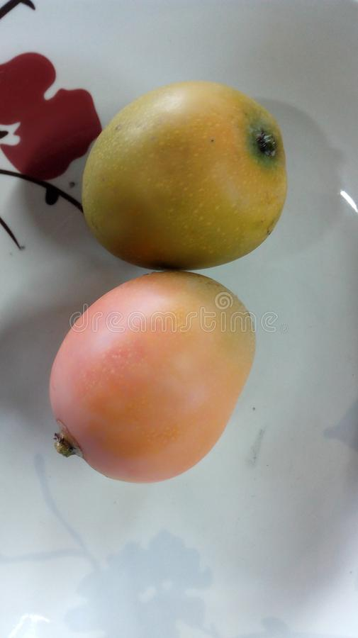 Two tropical fruit of mango yellow royalty free stock images