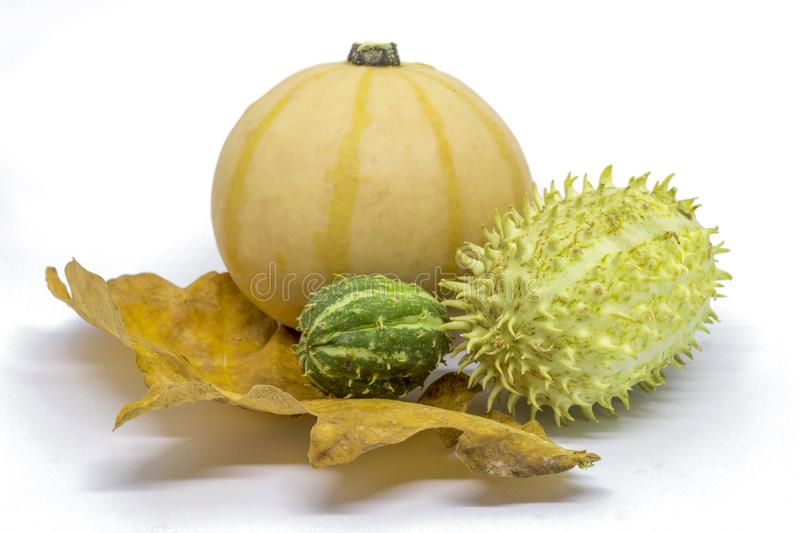 Pumpkin, horned melon vegetables royalty free stock photo