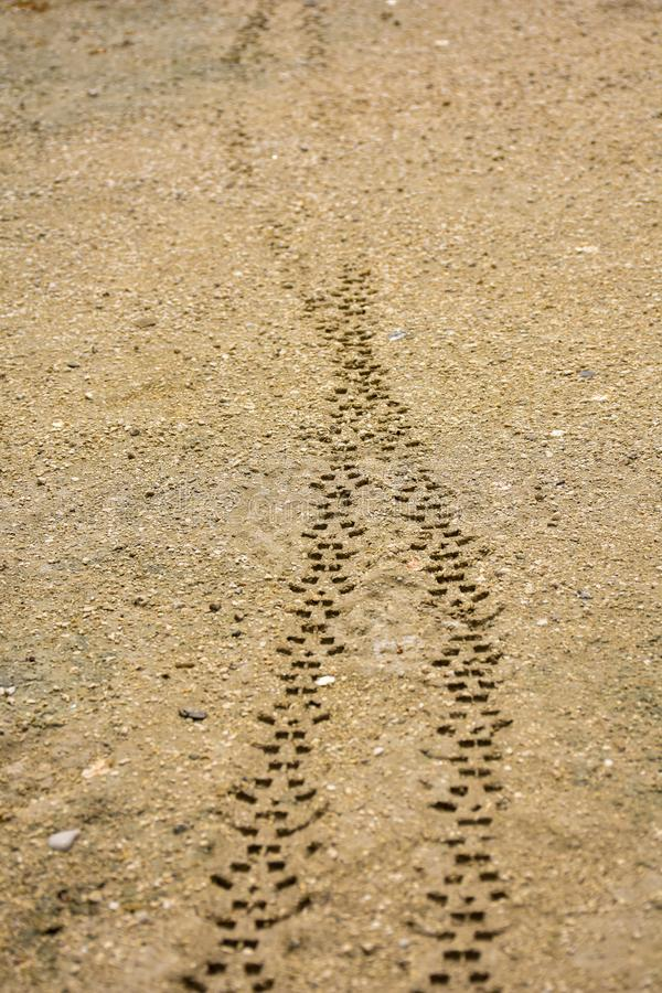 two tyre treads of the wheels of a transport vehicle on the brown sand off road. The treads were made on the fresh mud by a stock photography