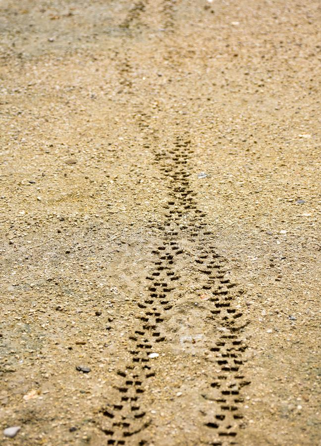 two tyre treads of the wheels of a transport vehicle on the brown sand off road. The treads were made on the fresh mud by a royalty free stock photo