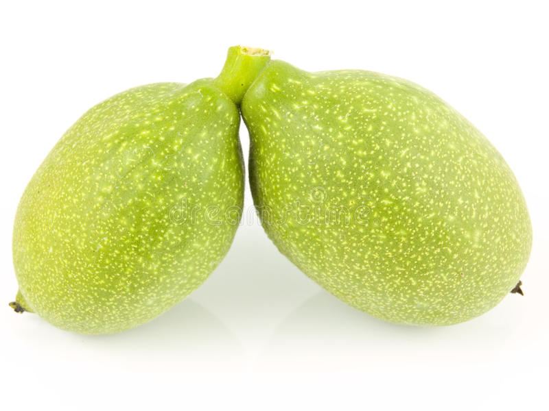 Download Two unripe walnuts stock image. Image of background, white - 10490079