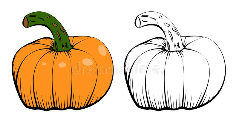 Two vector ink hand drawn icons of pumpkin. Linear sketch and engraving style. Colored and black and white illustration. Isolated on white background, art royalty free illustration