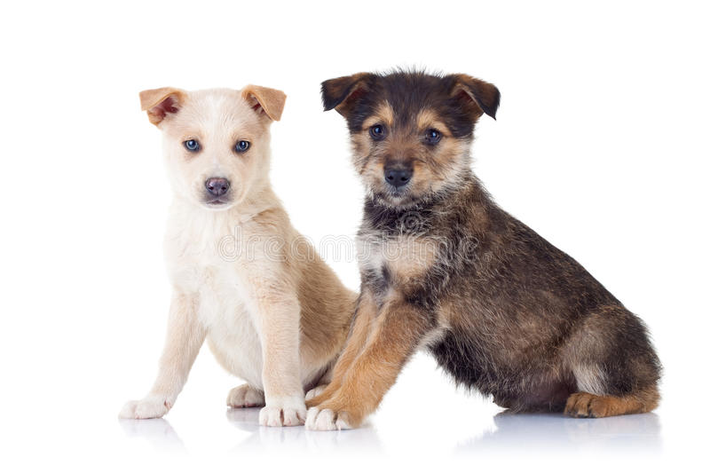 Download Two Very Cute Stray Puppies Stock Image - Image: 17970641