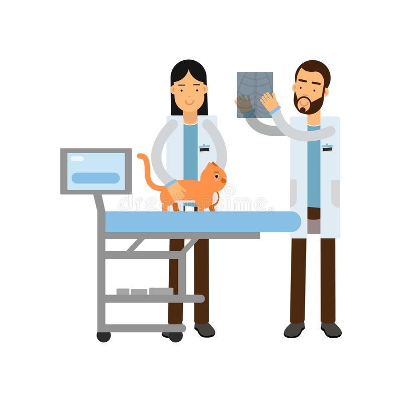 Two veterinary doctors examining red cat in vet clinic colorful cartoon vector Illustration vector illustration