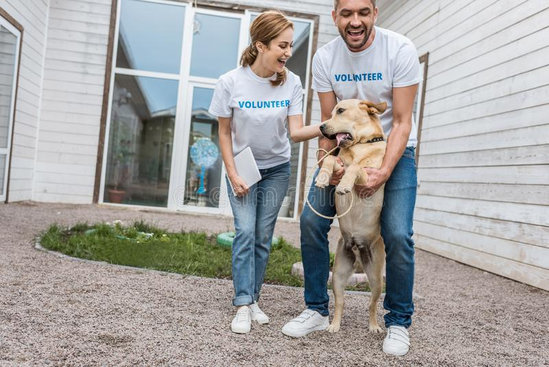 Two volunteers of animals shelter having fun. With labrador stock images