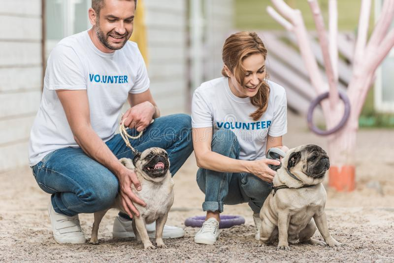Two volunteers of animals shelter palming pug. Dogs stock photography