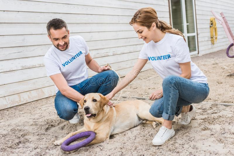 Two volunteers of animals shelter squatting and palming. Cute labrador royalty free stock photo