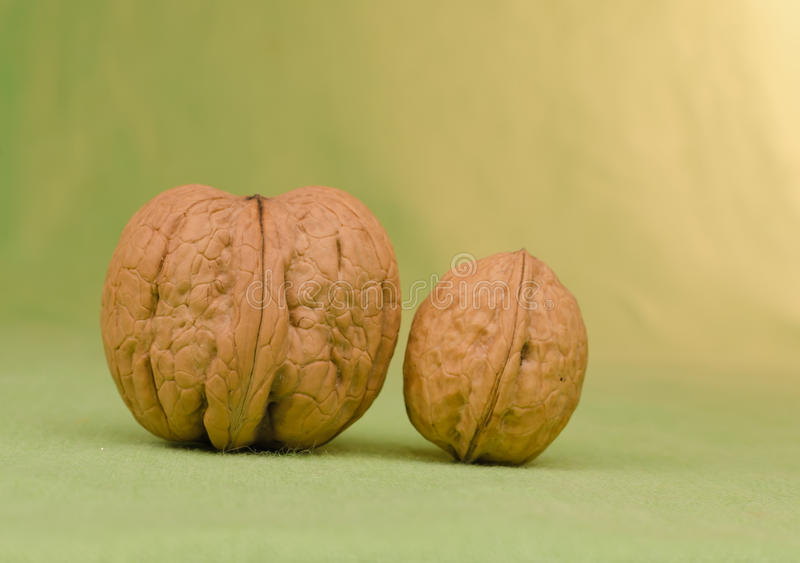 Two walnuts large and small stock image
