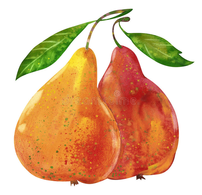 Two watercolor pears vector illustration