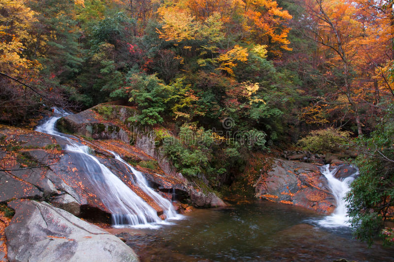Two waterfall in golden fall forest. In the autumn, two waterfall in golden fall forest. Which was in Guangwu(light and fog) mountain of Nanjiang country royalty free stock photography