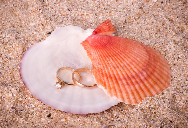 Two Wedding Golden Rings On Shell Royalty Free Stock Photo