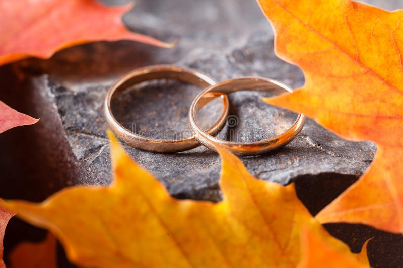 Two wedding-ring on old yellow foilage royalty free stock photography