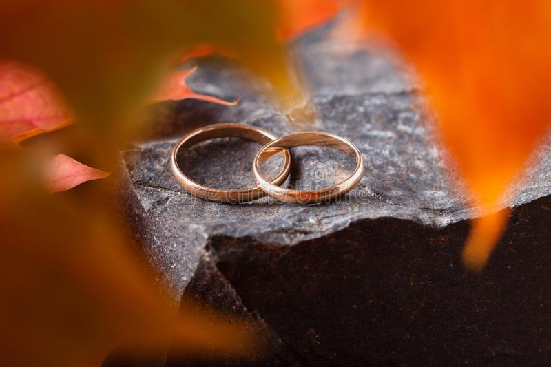 Two wedding-ring on old yellow foilage stock images